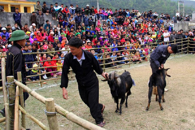 Goat fighting festival in Ha Giang 1