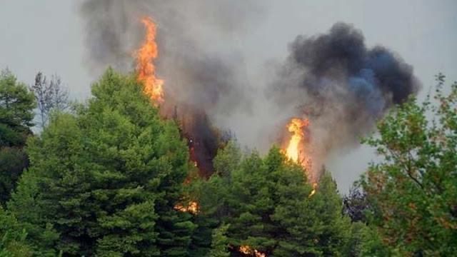 """Κίνδυνος πυρκαγιάς """"κατηγορίας 2"""" την Κυριακή 6/6 στην Αργολίδα"""