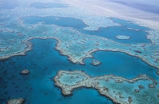 Caracóis gigantes podem salvar a Grande Barreira de Corais na Austrália.