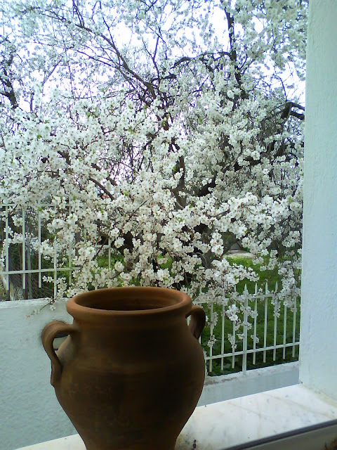 Almond blossom seen through my window Loutraki Greece Photo Greeker than the Greeks
