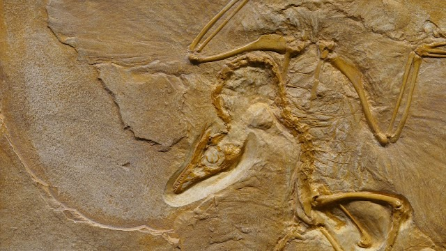 A 12-YEAR OLD FOUND A RARE DINOSAUR FOSSIL IN CANADA
