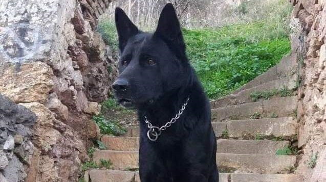 """Έφυγε από τη ζωή ο αστυνομικός σκύλος της Αργολίδας """"blacky"""""""