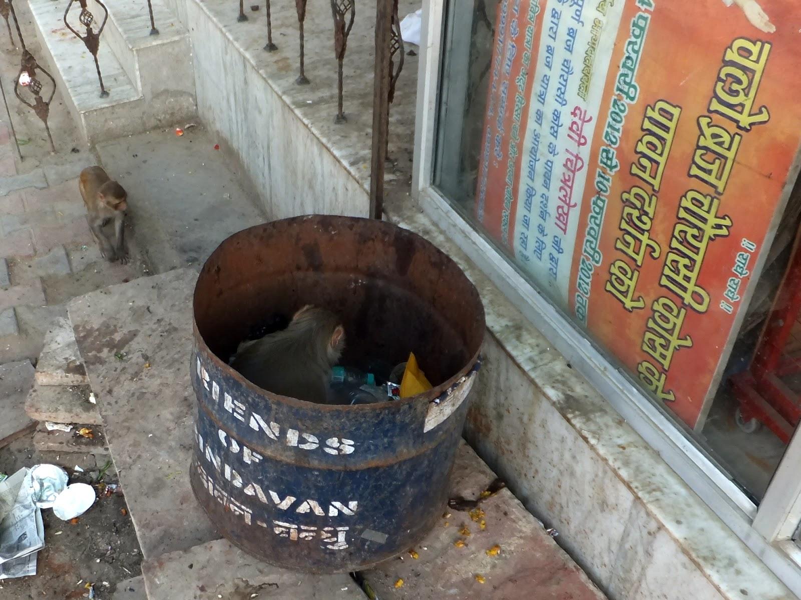 обезьяна роется в мусорном баке