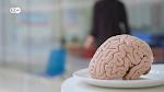 Nuestro.cerebro.es.lo.que.comemos.2019.DOCU-00335.png