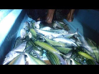 10 Benefits of Mackerel Fish for Children During Growth