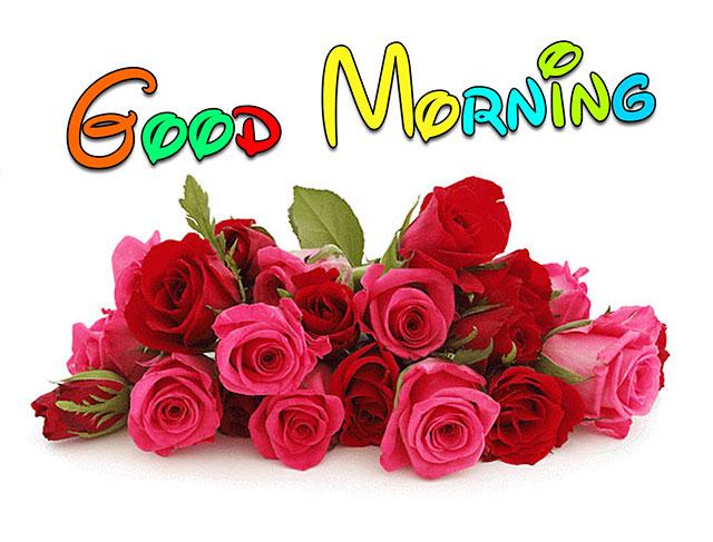 rose flower good morning image wishes