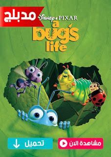 مشاهدة وتحميل فيلم حياة حشرة A Bug's Life 1998 مدبلج عربي