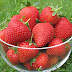 Strawberries Are Said to be One of The Most Attractive Fruits, Hardly Anyone Has Objection