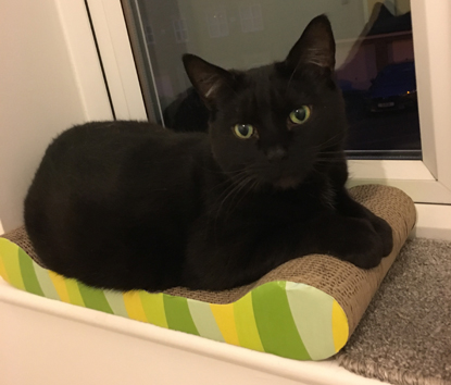 black cat sitting on cardboard cat scratching mat