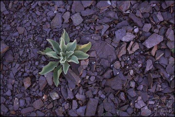 fotografia,naturaleza,brote,piedras,murcia
