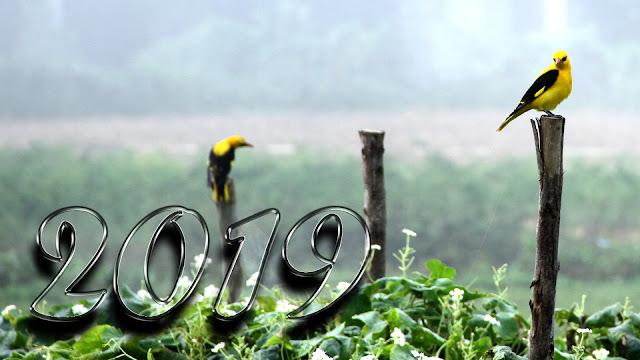 happy new year 2019 whatsapp status full hd images