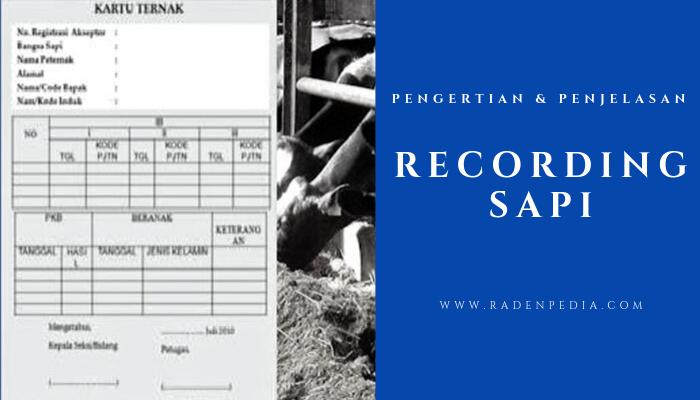 Contoh Recording Sapi dan Penjelasannya - radenpedia.com