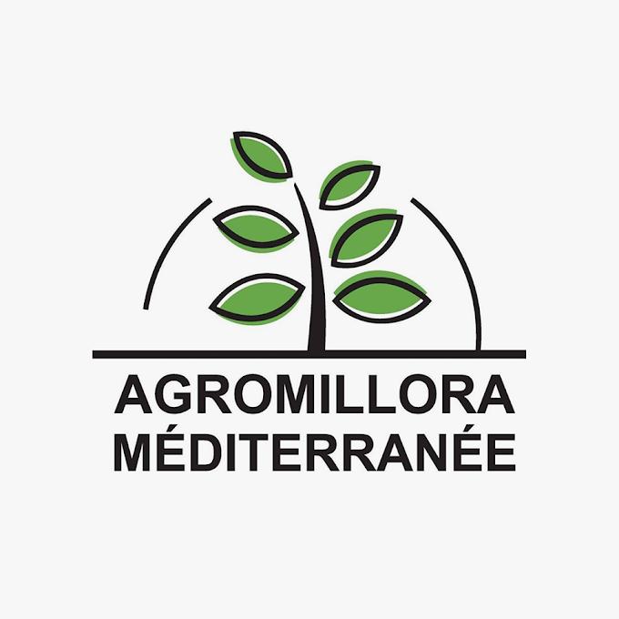 Pépinière AGROMILLORA MAROC : Production Plants d'Olivier Olint