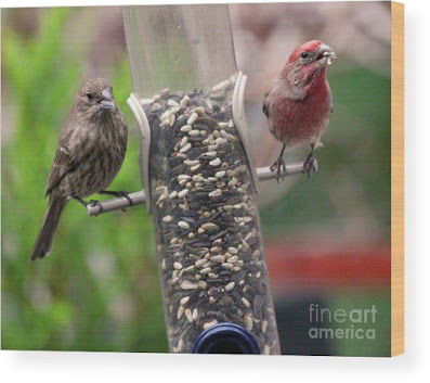 This is a screen shot of a photograph which has been rendered on to wood and I'm selling it via Fine Art America. It features a couple of House finches at a tube shaped bird feeder filled with seeds. The female (brownish) is on  the left side of the feeder while the male (red) is on the right of the tube. Info re this work of art is @ https://fineartamerica.com/featured/dinner-for-two-patricia-youngquist.html?product=wood-print