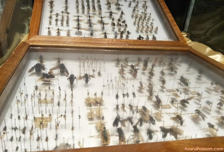 Pelbagai jenis lebah