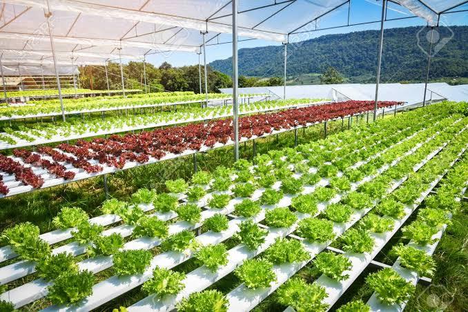 keuntungan hidroponik bagi petani