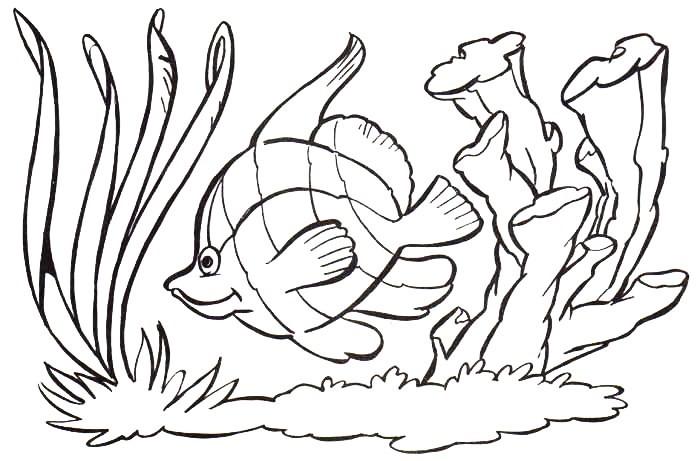 Desenhos De Animais Do Mar