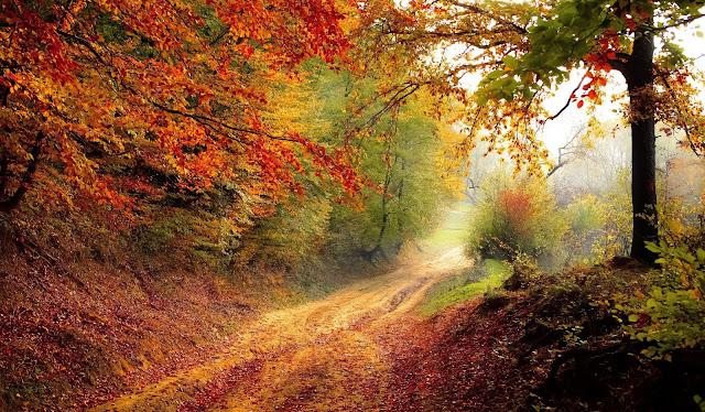 Hình ảnh thiên nhiên đẹp nhất 4k - The most beautiful nature picture 4k 7