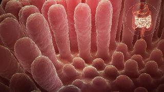intestinal villus