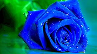 صور ورود | أجمل صور الورود والزهور ملونة أحمر 2021