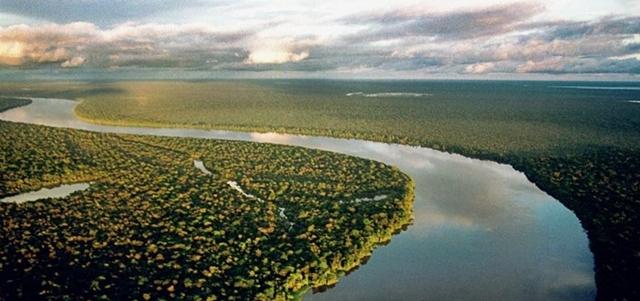No Dia do Meio Ambiente, MP diz que governo Bolsonaro causou danos ao meio ambientais'