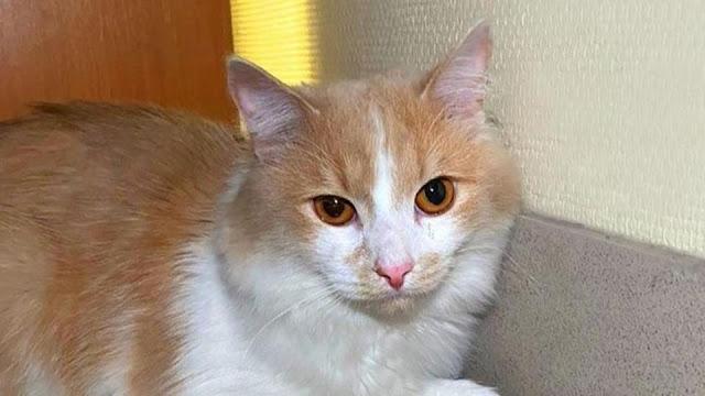 """Меня предали"": хозяйка бросила кота в аэропорту на Урале и улетела"