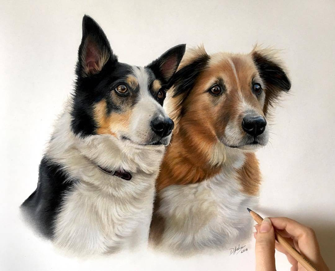 01-Bailey-and-Oliver-Danielle-Fisher-Dog-Portraits-with-Pastel-Drawings-www-designstack-co