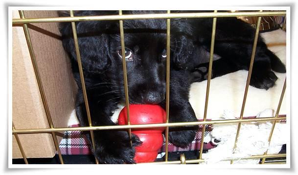 dog crate training schedule