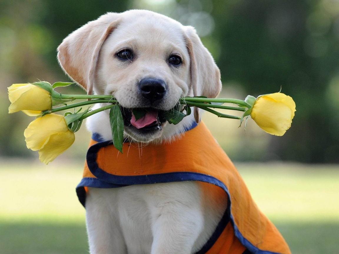 Dog Backgrounds Best Friend Lovely Dog Images: Lovely Wallpapers: Cute Puppies Wallpapers