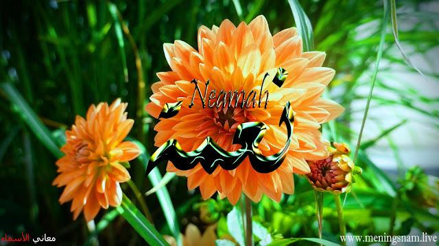 معنى اسم نعمة وصفات حاملة هذا الإسم Neama