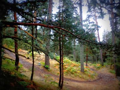 Paseo por el campo en otoño. Valle de la Fuenfría. Sierra de Madrid