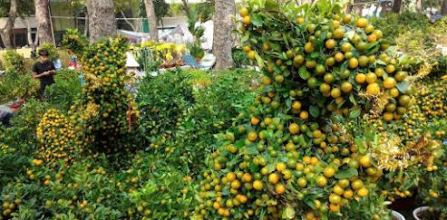 kumquat-leaf-garden