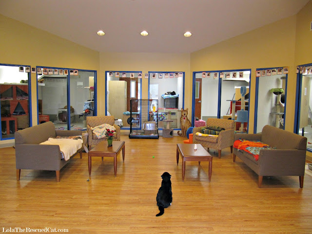 tabby's place|animal shelters|cat sanctuary