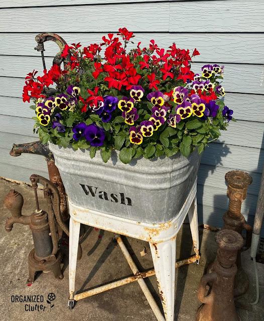 Photo of pansies & an ivy geranium basket.
