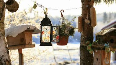 Jardines y paisajes de invierno según Sergey Karepanov: Finlandia