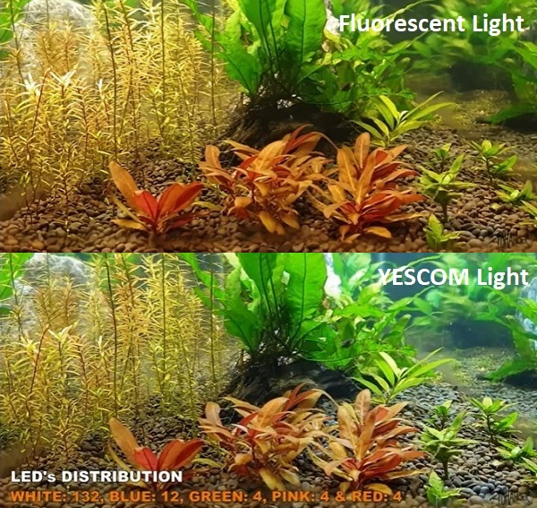 Comparison of Fluorescent vs Yescom Lights