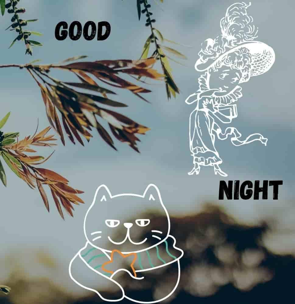 Cat-funny-good-night-image