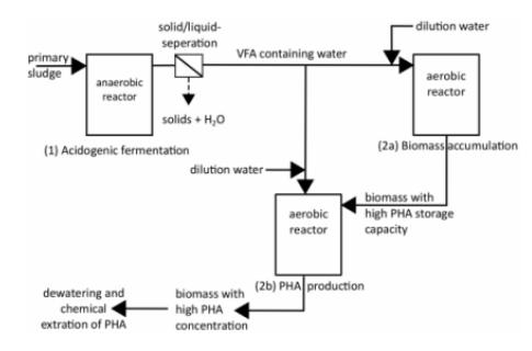 Proses Produksi PHA dari Limbah Organik