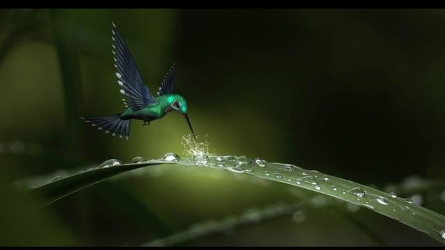 Birds-Rain