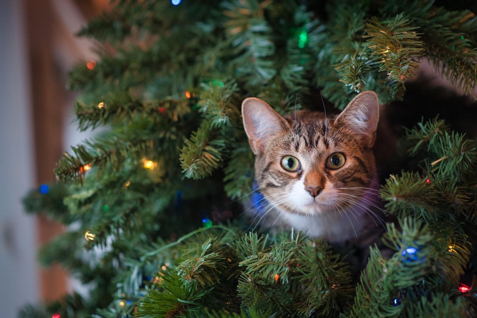 Immagini Stupide Di Natale.Scrivere Un Perfetto Racconto Di Natale