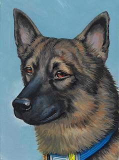 A portrait of XK9 Shady, a large black sable dog.