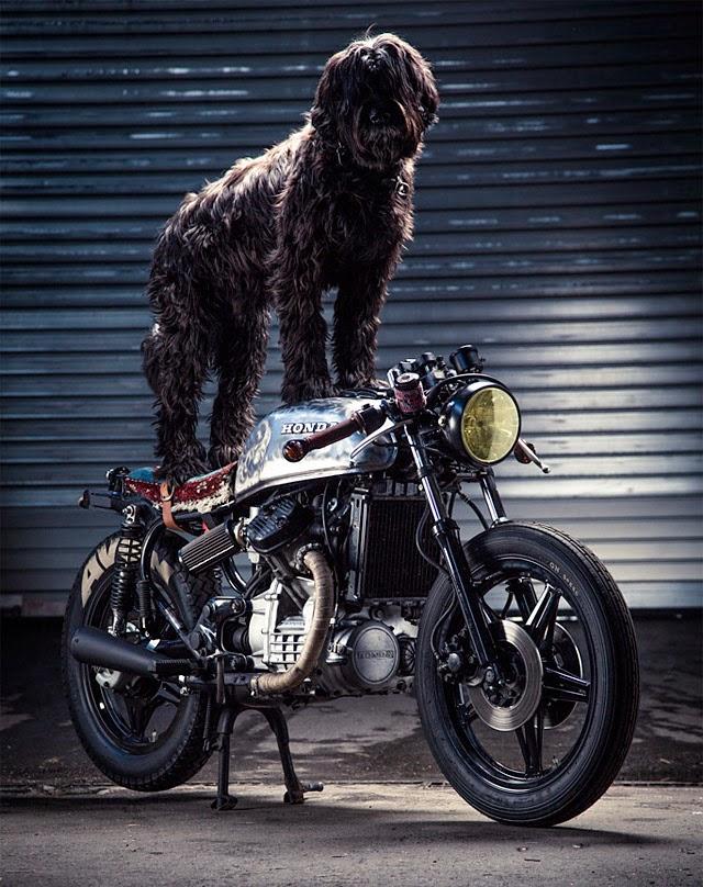 Dog CX