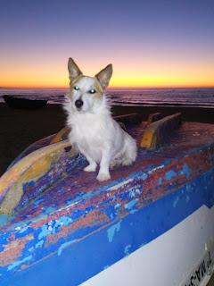Pate-koira valloitti Fuengirolan