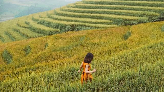 September, check-in golden season in 7 famous ripe rice lands