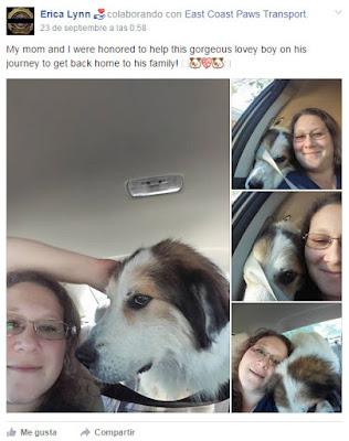 perro viaja 1800 km en autostop