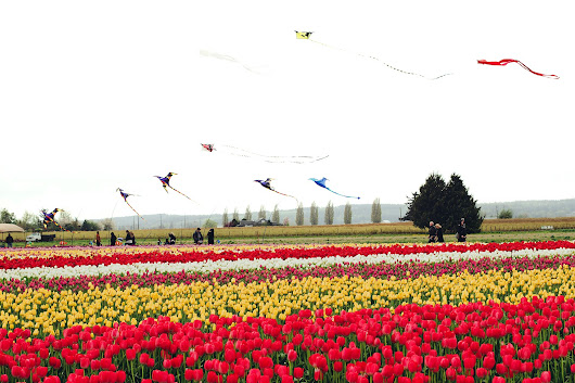 A Trip to Tulip Town