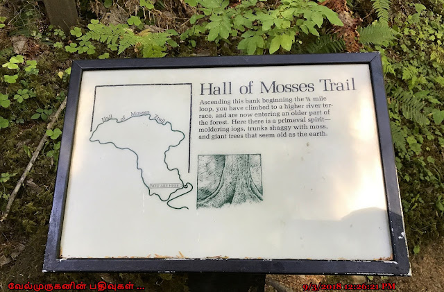 Hall of Mosses Trail in Hoh