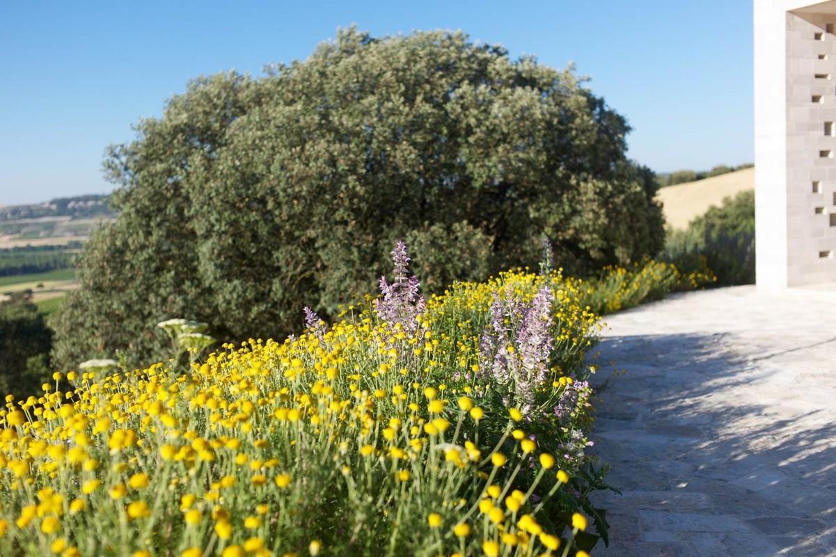 Central Spain Garden by Tom Stuart Smith, Jardín Bodega Domino de Pingus Ribera de Duero