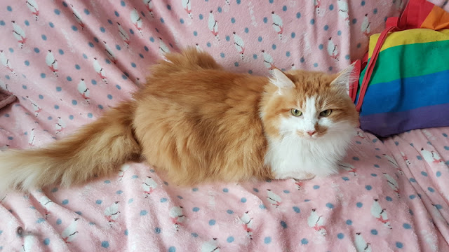 red and white fluffy cat