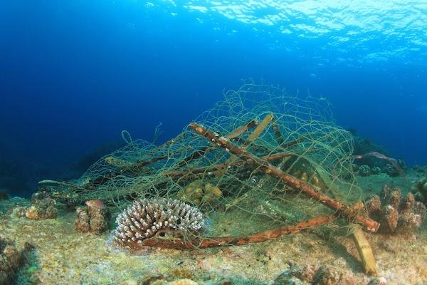 Redes Fantasma: Regeneración de Ecosistemas Marinos